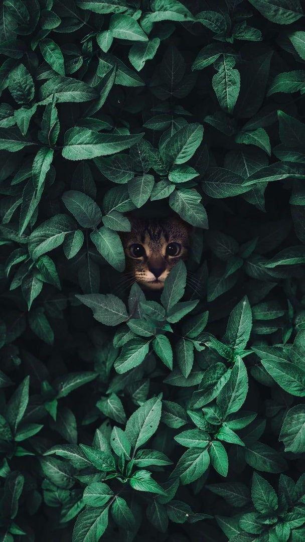 бенгальская порода породы кошек кошки видео коты ...