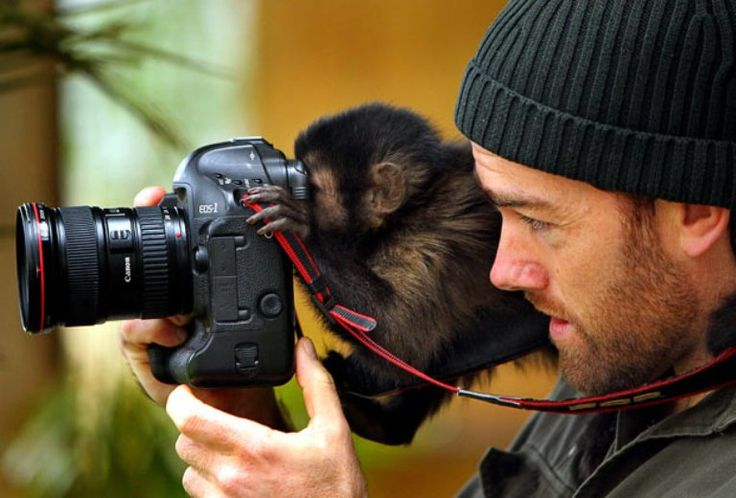 brazilian capuchin monkeys  The capuchin monkey is known to be extremely social