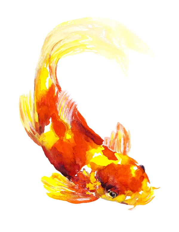 Orange yellow koi fish watercolour painting by artist for Orange coy fish
