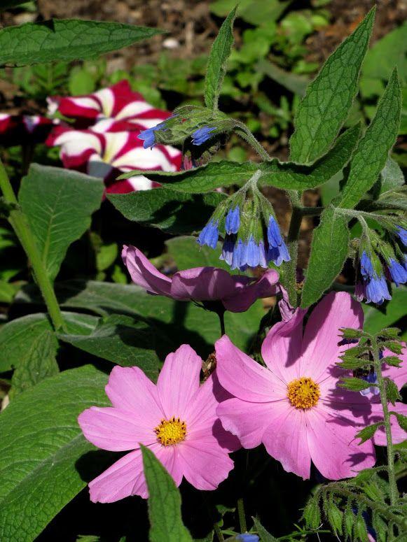 Photo In OSH Garden May 17, 2014