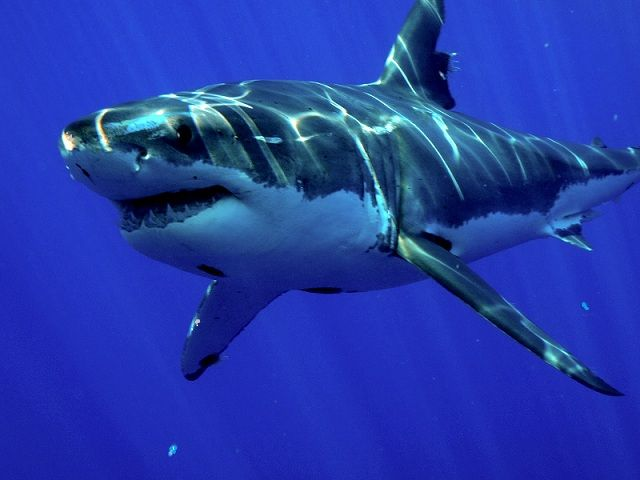 sea-animals-6.jpg 640×480 pixels