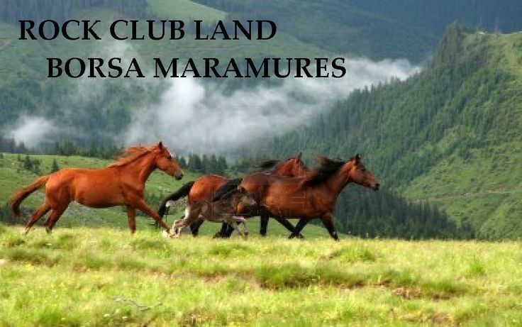 free mustang on rodna national park