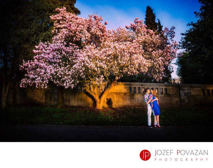 Best Award winning Vancouver wedding photographers Povazan Photography - Stanley park cherry blossom romance engagement pictures: Stanley park cherry blossom romance engagement pictures . Location: Stanley park, Vancouver, BC. Exif:  (more exif)All Exif (hide).