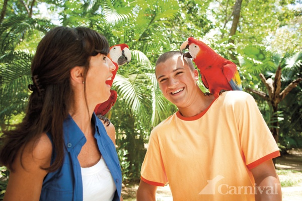 """Chatting with birds trying to teach them """"Pahk the cah in havad yahd"""" Yeah Boston accent hahaha"""