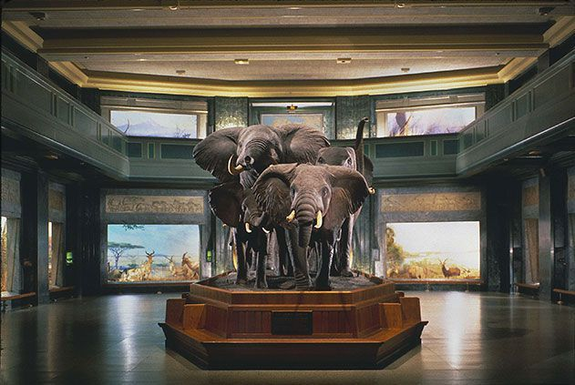 Five Must See Museums In New York City New York Museums Natural History Museum Nyc Museums In Nyc