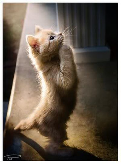 Fotos de gatos que rezan