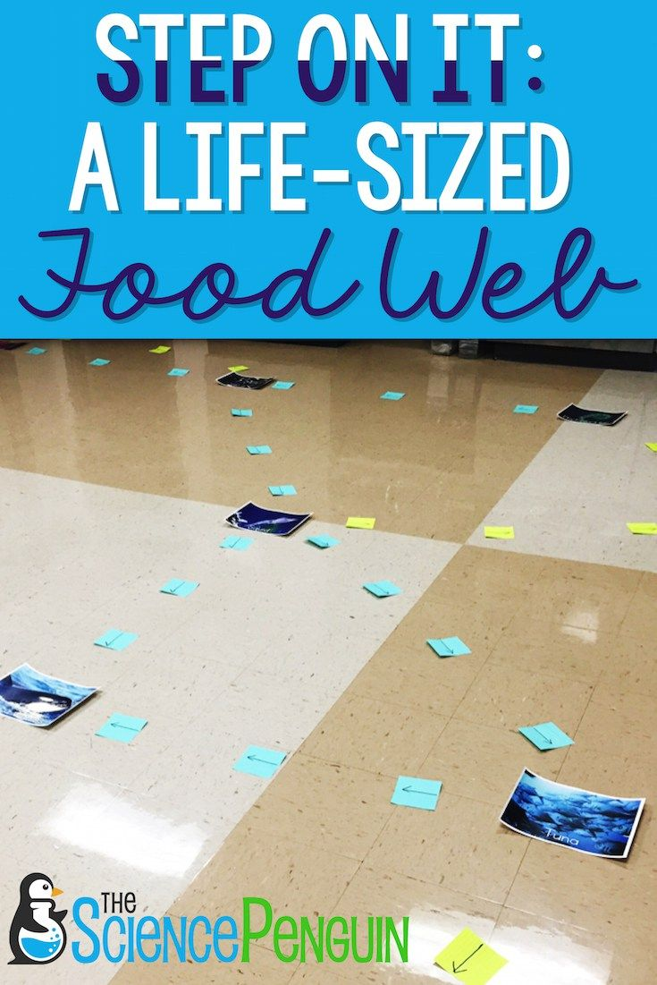 Step on it!  A life-sized food web (free printables!)
