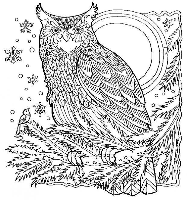 8208ausmalbuchvorlageeulezencolor 620×665