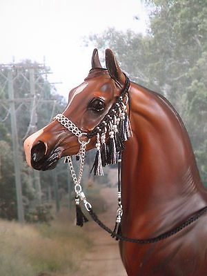 how to train an arabian halter horse