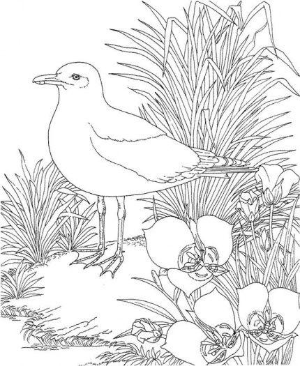 Meeuw kleurplaat / Gull In Garden