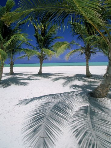 White Sand & Palm Trees people......Its just the BEST!!!! Playa Juanillo, Dominican Republic