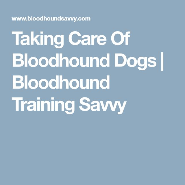 Taking Care Of Bloodhound Dogs | Bloodhound Training Savvy