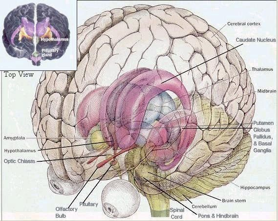 Brainspinalcord my photo pinterest brain diagram and brain ccuart Choice Image