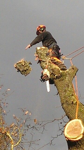 Cutting hedge tree services of gwent Arborist tree surgery  Another job well done :)