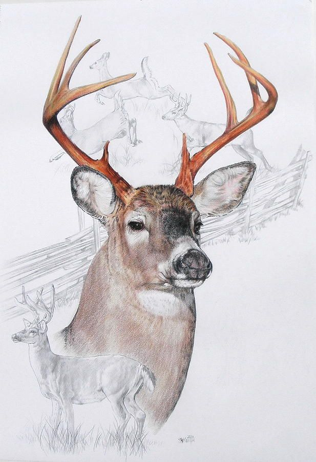 57 best Pencil art images on Pinterest | Deer family, Deer and Animales