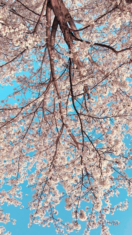 Pinterest Com Pinterest Pins Pinterest Com Pinterest Pins Latar Belakang Fotografi Alam Fotografi Abstrak Coolest flower tree wallpaper images