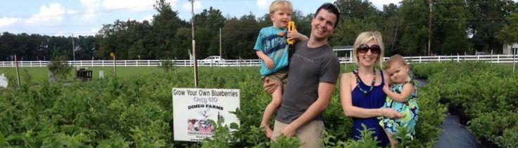 Blueberry Plants for Sale   DiMeo Fruit Farms & Organic Berry Plant Nursery Blog