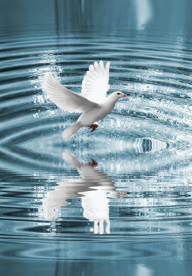 Les 21 meilleures images propos de reflets sur pinterest for Le jardin qui bouge