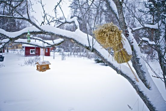 White Christmas in Finland