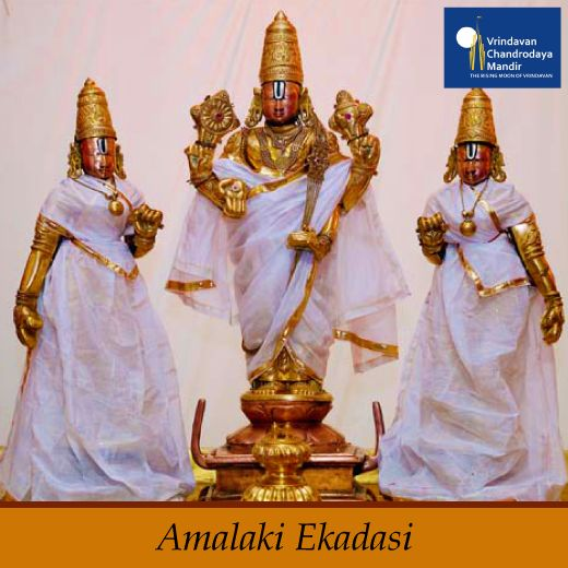 The greatness of Amalaki Ekadashi was narrated by Sage Valmiki. It is a celebration of the amalaka or amla tree, known as the Indian gooseberry. It is believed that by observing Amalaki Ekadasi, a devotee attains Moksha and washes away all the sins committed. Special pujas and offerings are made to the Amalaki Tree on this day.