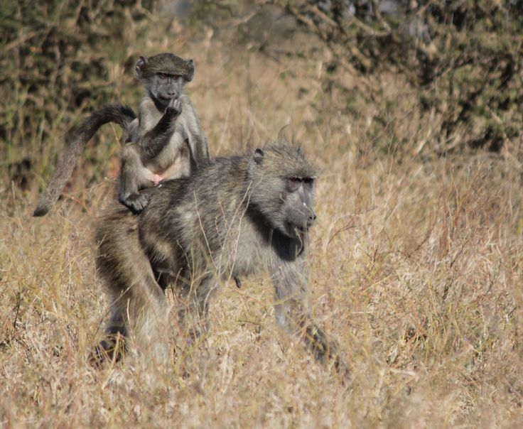 FATHERS DAY IN KRUGER