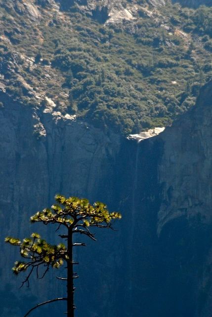 Yosemite is staggeringly beautiful in large and little ways.