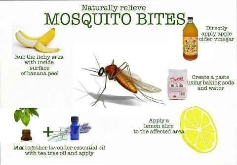 Para las picaduras de los mosquitos... remedios naturales. Los viernes de Ecología Cotidiana