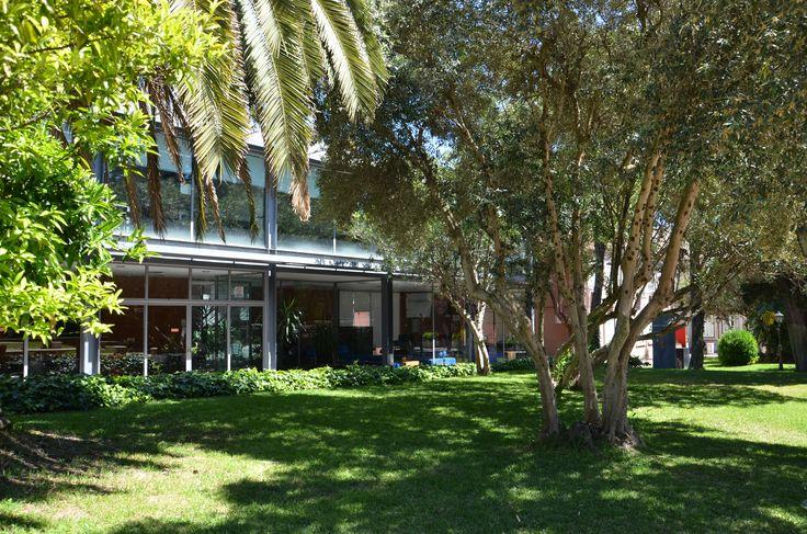 Pormenor do Jardim da Universidade Lusíada de Lisboa. (Fotografia de Helder da Rocha Machado, 2014)