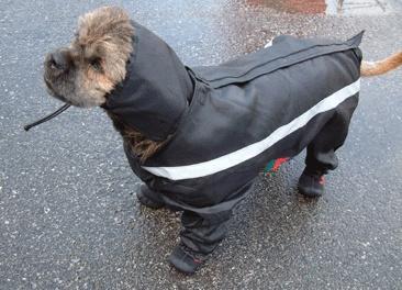 All Weather Dog Coat All Sizes Dog Raincoat Amp Snowsuit