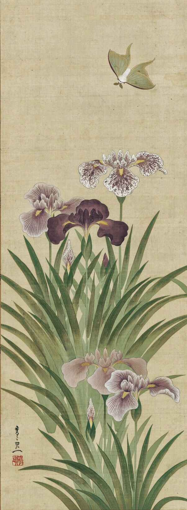 Suzuki Kiitsu | Irises and Moth (cropped). Edo period (1615–1868) | nineteenth century. Japanese hanging scroll. The Met