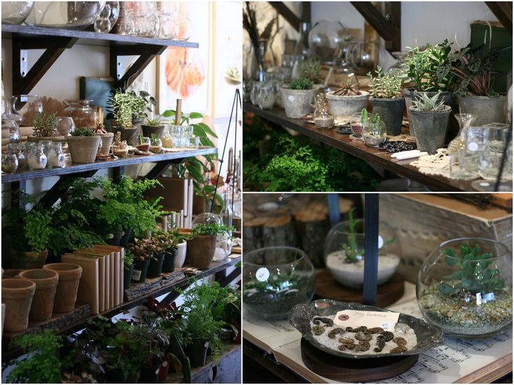 Terrarium shop?? That's what I said when my coworker told me about Artemisia  after getting a terrarium gift certificate from there as a bir...
