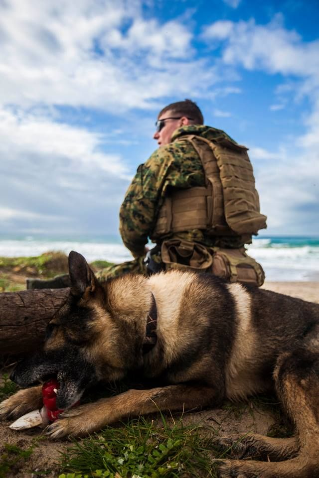 17 Best images about War Dogs on Pinterest | Soldiers, Lucca and ...