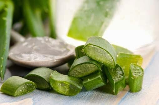 Aloe-vera. En general el aloe es bueno para todo. Es buen desinflamatorio así que sus recetas son excelentes para pacientes con cáncer