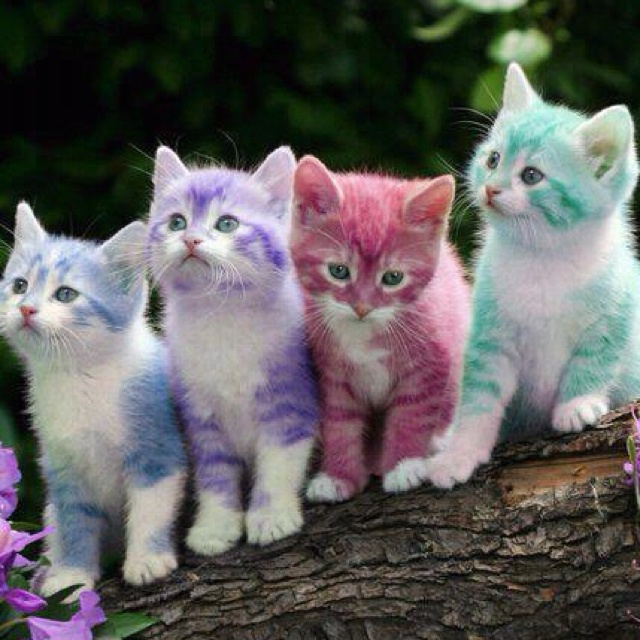 Skittle kitty's. Awwwe