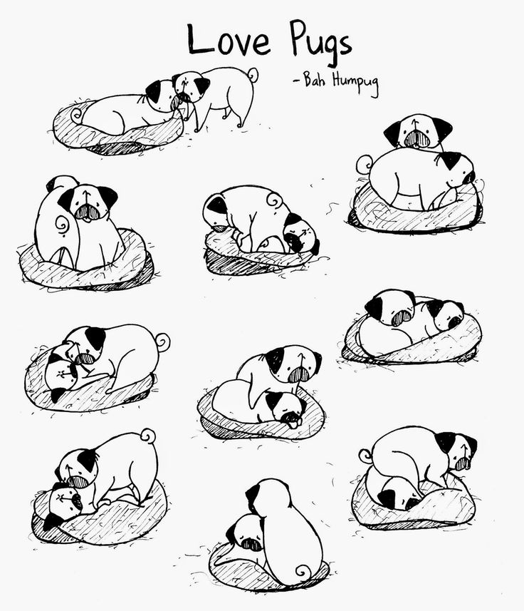 Bah Humpug: Love Pugs (all of these drawings are based on actual screenshots of Sunny and Rosy captured from the pugcam)