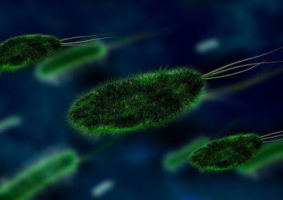 Tips Diet - Mikroba merupakan makhluk hidup yang bisa dijadikan alternatif untuk melangsingkan badan...