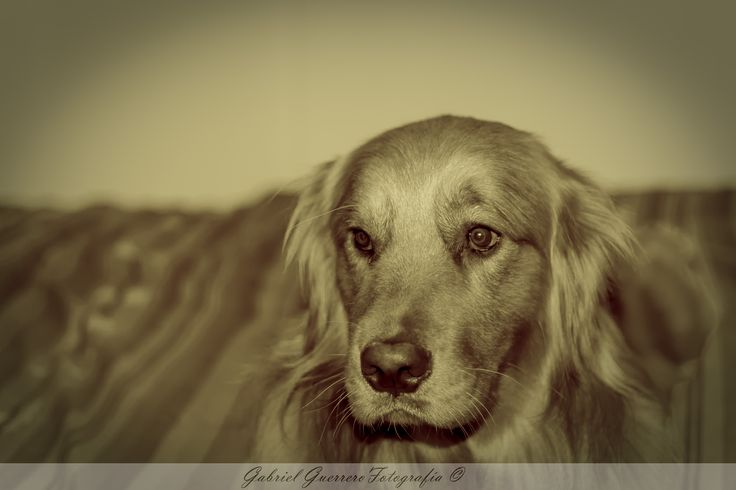 My Dog by Gabriel Guerrero on 500px