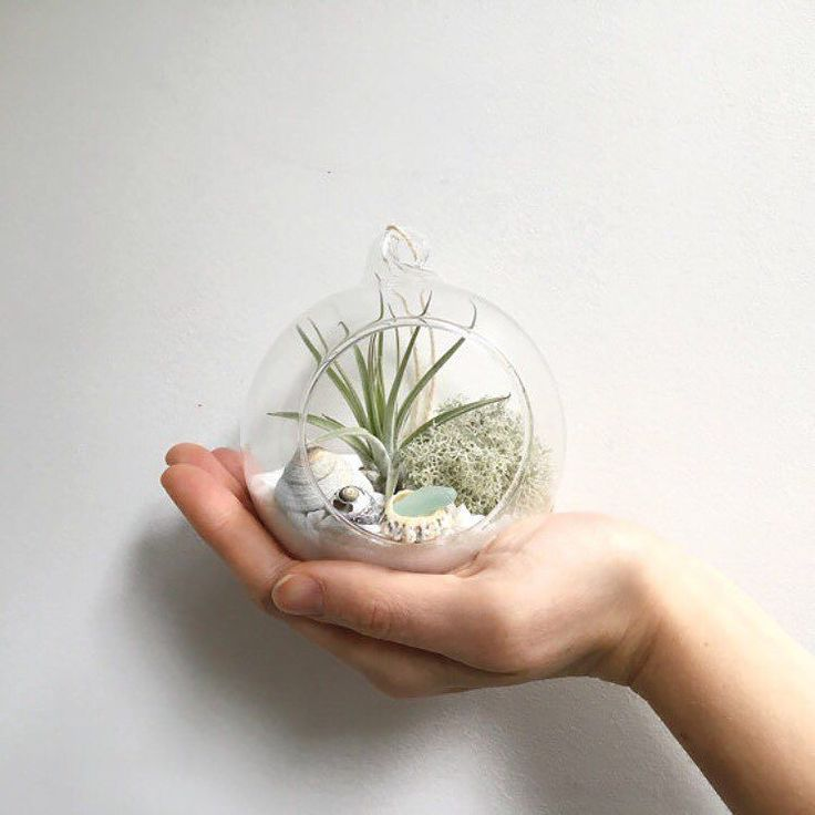 I'm jumping in three days late on the @etsymakerscornwall insta challenge so hi! I'm Skye I run an Etsy shop called The Skygardens from my home in Falmouth making air plant terrarium kits and brass himmeli. My best-selling kits are significantly inspired by Cornish beaches and come with shells and sea glass collected from local beaches by myself and my family. I work from home which is currently our house that we moved into just 3 weeks ago. There are still boxes and general chaos in what…
