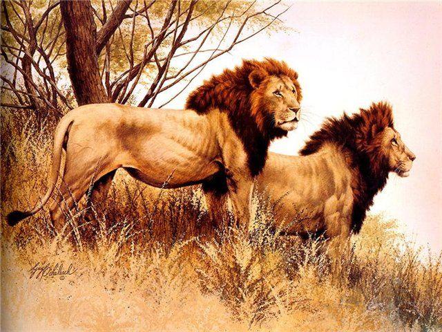 Le 25 migliori idee su disegno leone su pinterest arte geometrica disegno geometrico e leone arte - Leone e capricorno a letto ...