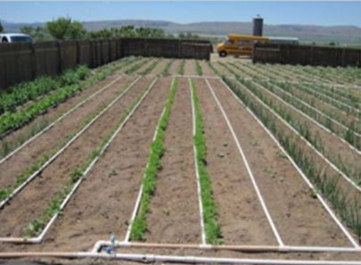 Great Idea!  Designing a Basic PVC Home Garden Drip Irrigation System http://extension.usu.edu/files/publications/publication/Horticulture_Home_2008-02pr.pdf