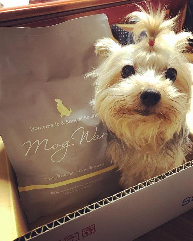 リコの新しいごはん😊 #newdogfood  #新しいドッグフード  #magwan  #モグワン  #りこ #ヨーキー #ヨークシャーテリア #ヨーキースタグラム #愛犬 #yorkie #yorksharterria #Rico #yorkiestagram