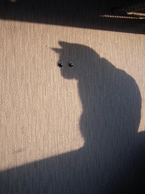 Shadow Cat - nice image
