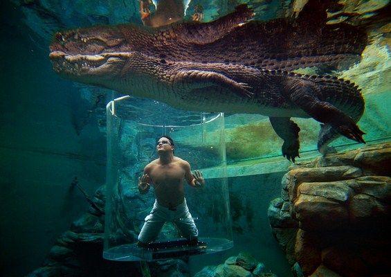 "One of the best ""swimming pools"" in the World – Crocosaurus Cove – Darwin #Australia"