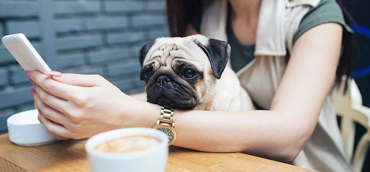 Adelaide's got all sorts of dog-friendly cafes, and here are our top five.