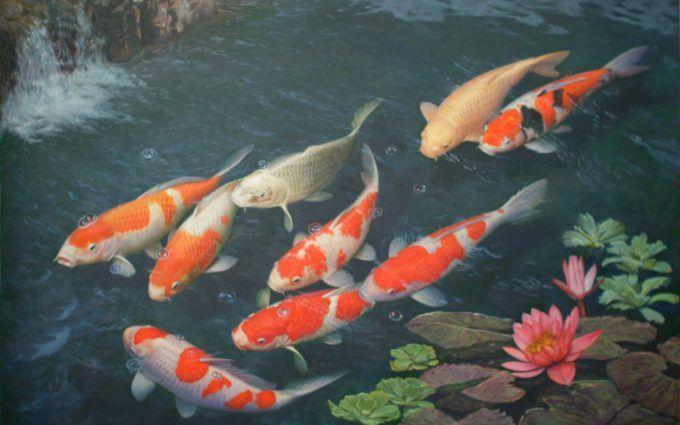 Koi Fish Pictures Hd Hd Desktop Wallpapers 4k Hd In 2019