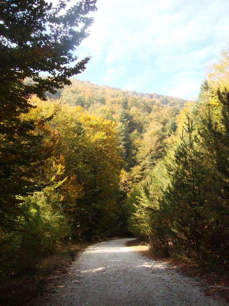 Elatoxori, Pieria Greece...lost in the mountain