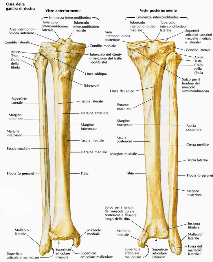 40 best ANATOMIA images on Pinterest   Bones, Centre and Chiropractic