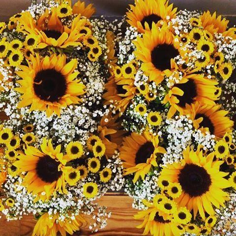 SUNFLOWER WEDDING Vibrant Bridesmaid bouquets.  #uk #sunflower #hampshire #hampshireflorist #horndean #portsmouth #gypsophila #sun #sunshine #yellow #bridesmaids #bouquet #florist #weddingflorist #wedding #weddingflowers #sunflowers http://gelinshop.com/ipost/1521564284819054953/?code=BUdrqfLj6Fp