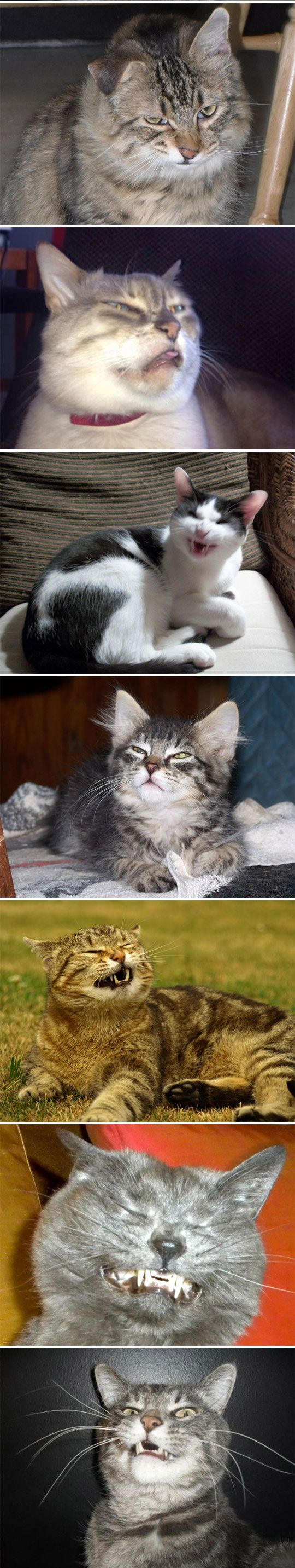 Cats about to sneeze... - The Meta Picture