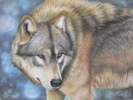 Wolf ~ Pastel on Velour Paper .Thank you to Wildlife Reference Photos for the beautiful photo !